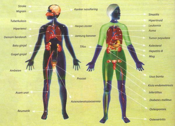 jual propolis murah harga propolis obat propolis www.propolis4life.wordpress.com 082218120457