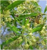 propolis brazilian, propolis nano, manfaat propolis, khasiat propolis