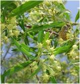 manfaat propolis khasiat propolis obat propolis www.propolis4life.wordpress.com 082218120457