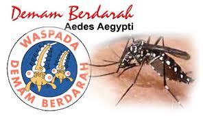 obat demam berdarah manfaat propolis obat propolis www.propolis4life.wordpress.com 082218120457