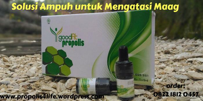 obat maag, obat asam lambung tinggi, propolis untuk maag