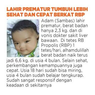 propolis untuk bayi